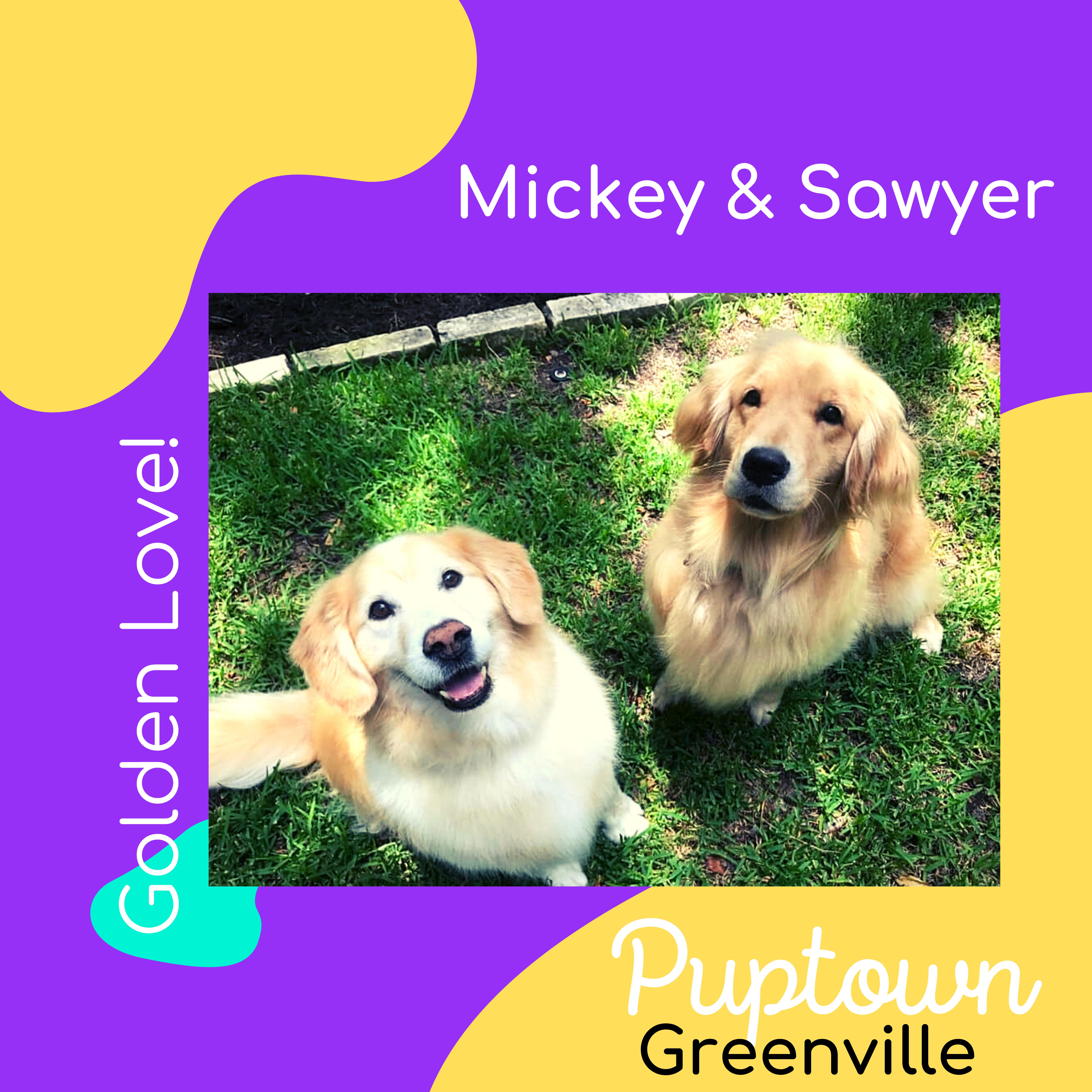 Pet Sitters in Greenville NC