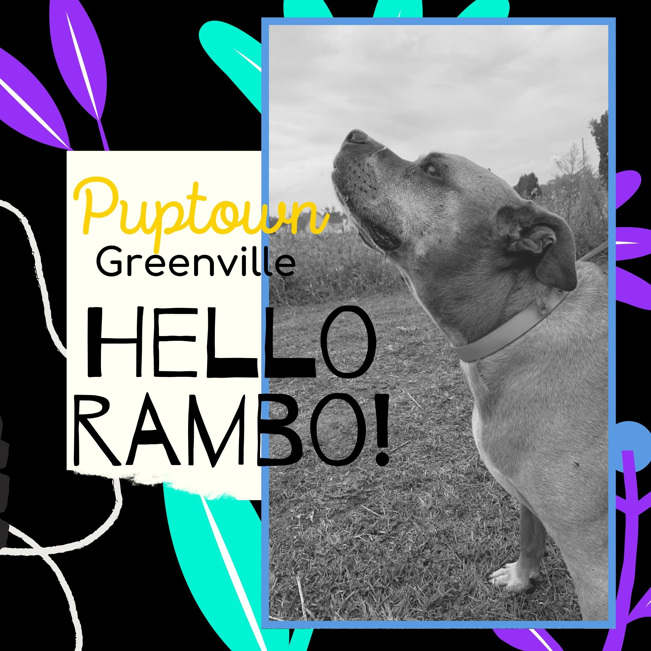 Dog Boarding Greenville NC